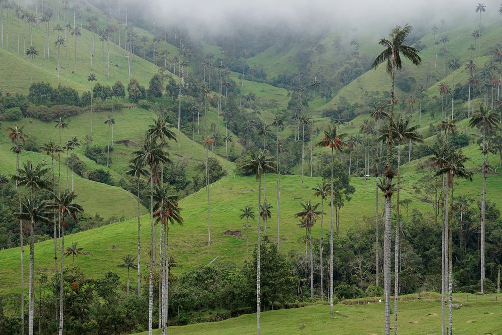 Hiking Valle de Cocora | Salento, Colombia