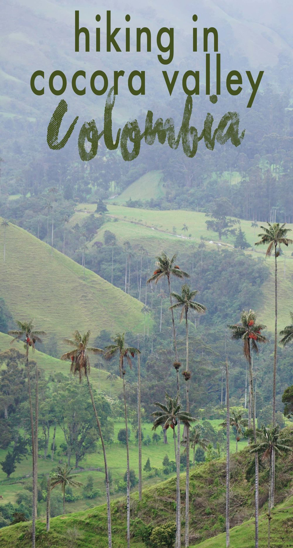 Cocora Valley, Salento, Colombia