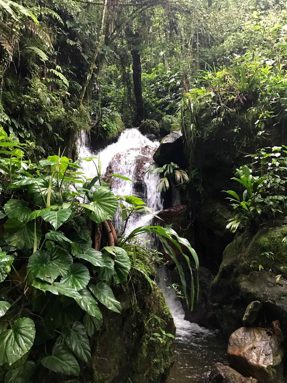 Lost-City-Colombia-hike-river-waterfall3.jpg