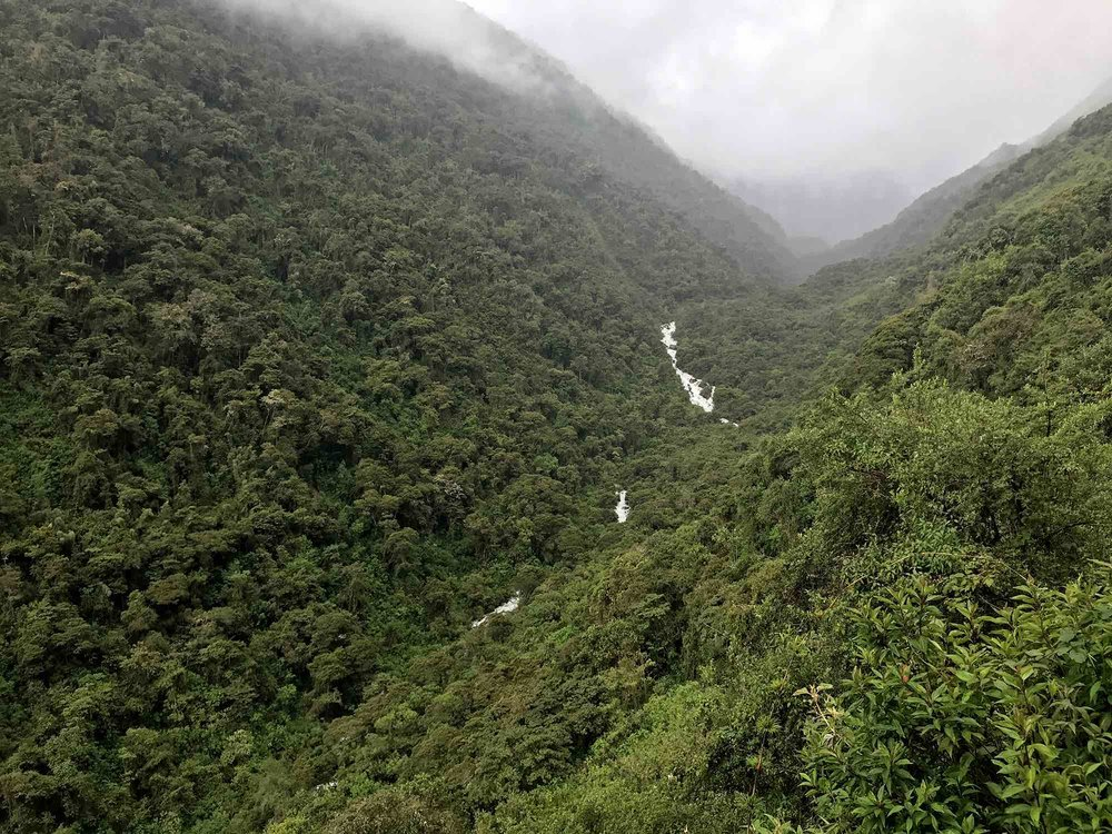 Amazon Rainforest on Day 3 | Salkantay Trek to Machu Picchu Peru