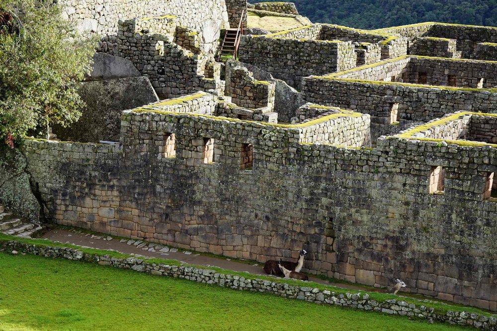 Machu-Picchu-Peru-llamas.jpg