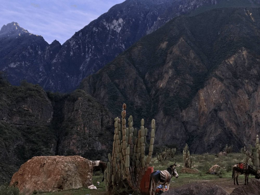 Colca Canyon early morning donkeys