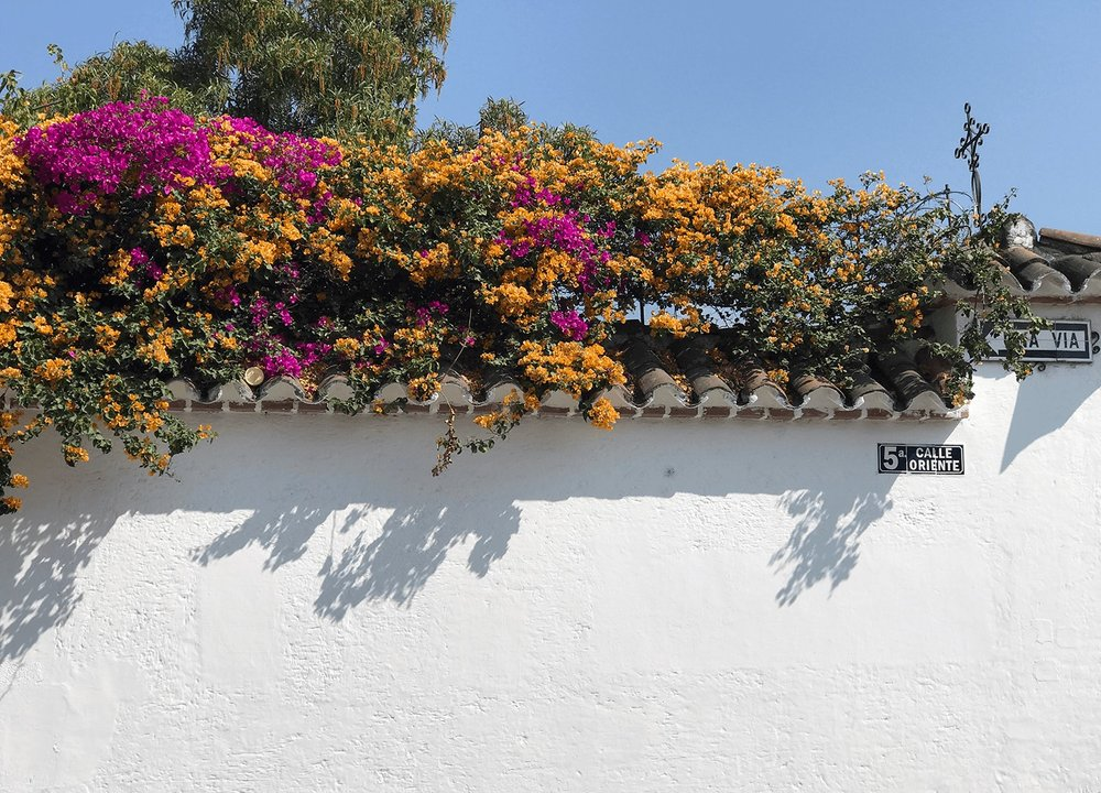 antigua guatemala wall and flowers