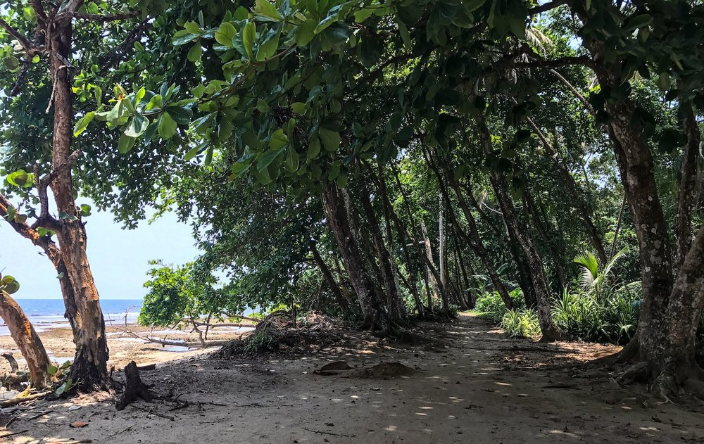 beach path in Puerto Viejo Costa Rica