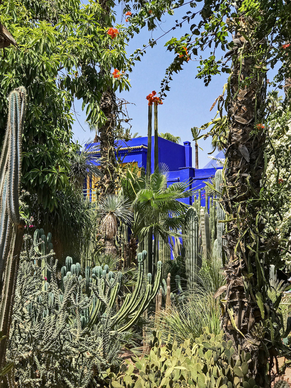 Jardin Majorelle | The City that Inspired Fashion Icon, Yves Saint-Laurent Most
