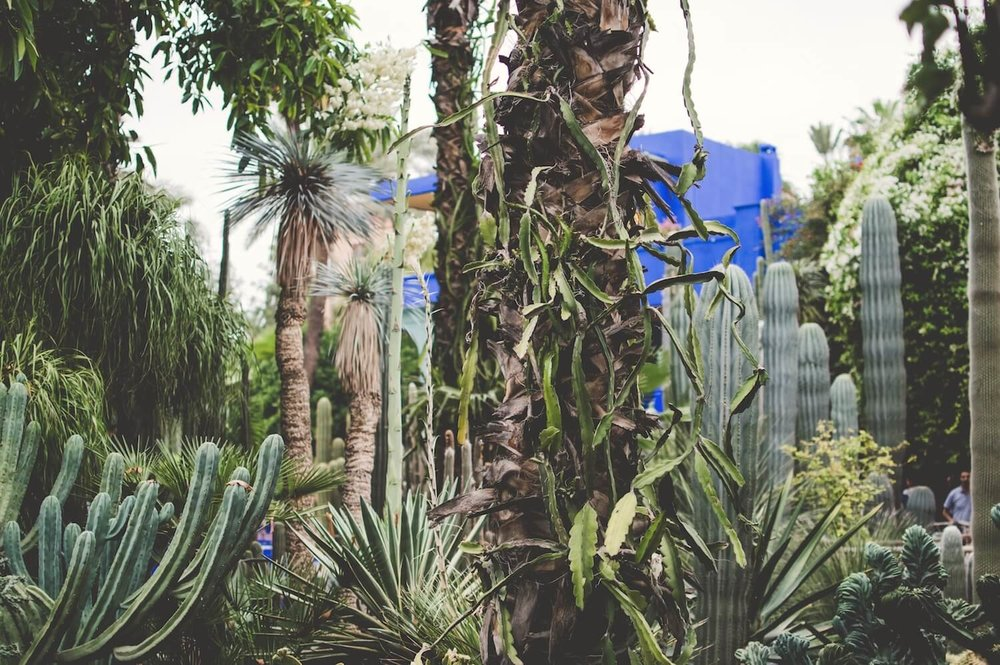 La Jardin Majorelle in Marrakech, Morocco | The City that Inspired Fashion Icon, Yves Saint-Laurent Most