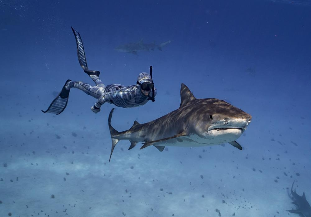 Riley sharks.jpg