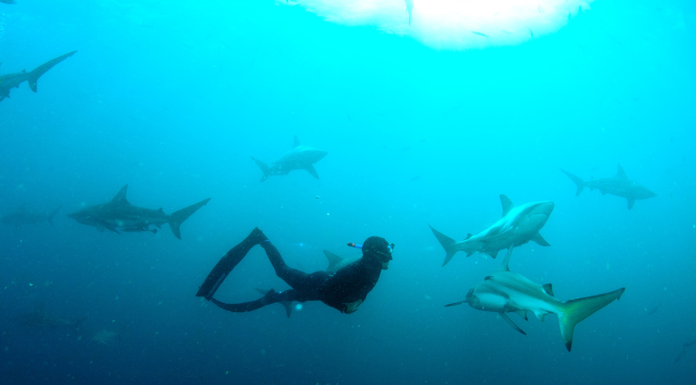 Shark Park SC.jpg