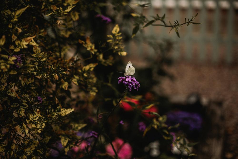 videos bbc sesh - love luella photography-101.jpg