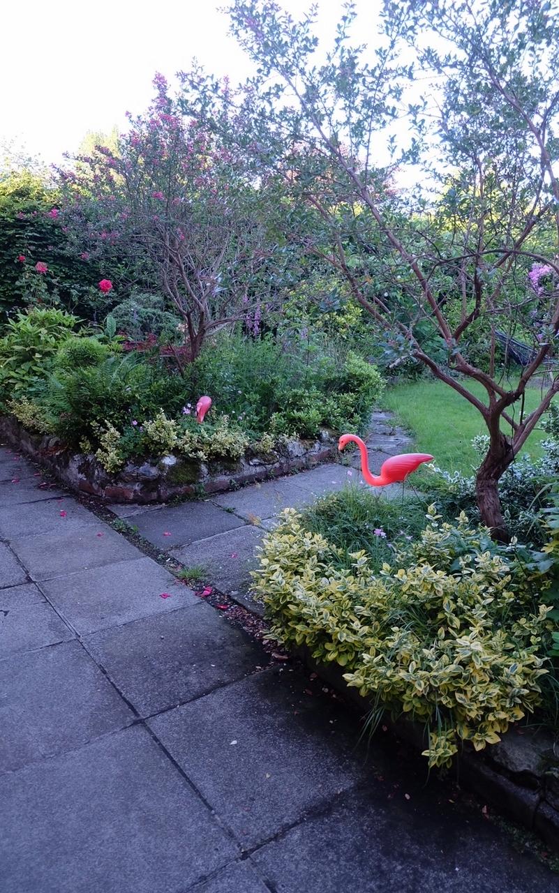 Garden Flamingoes