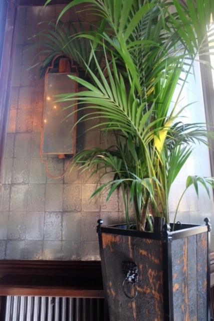 Palm Tree & Cole & Son wallpaper