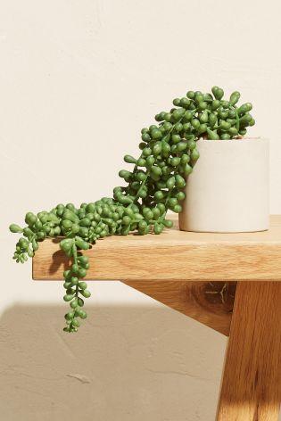 Next faux succulent