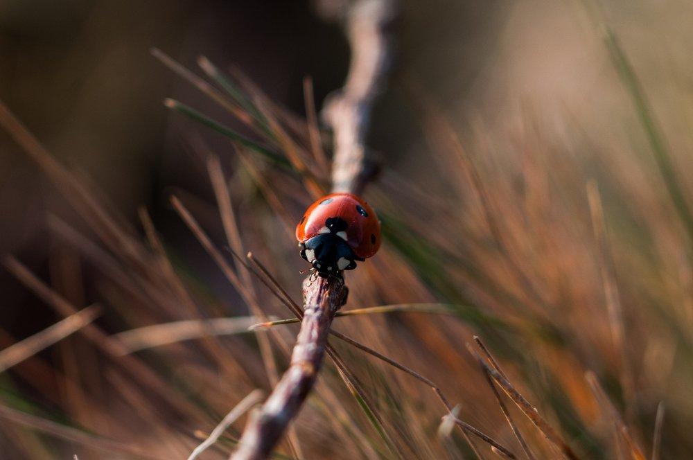 ladybug-1209898_1920.jpg