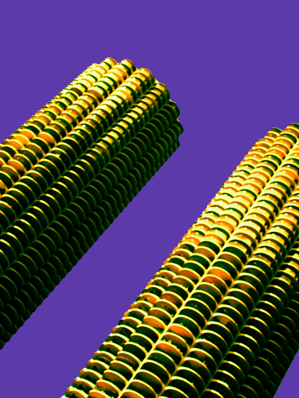Corn Cobs, digitally enhanced photograph, 2006