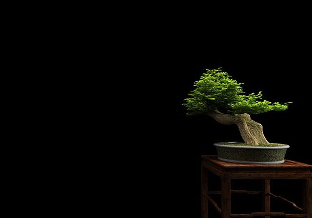 Bonsai: for thousands of years people have been taking normal trees and forcing them into miniature. We have some beautiful juniper and ceramic containers in stock if you are interested in learning more about this ancient practice. #bonsai