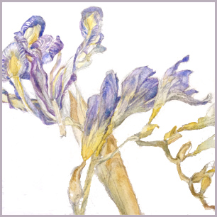 image: Watercolor painting of dried iris and freesia by Jess Jakus