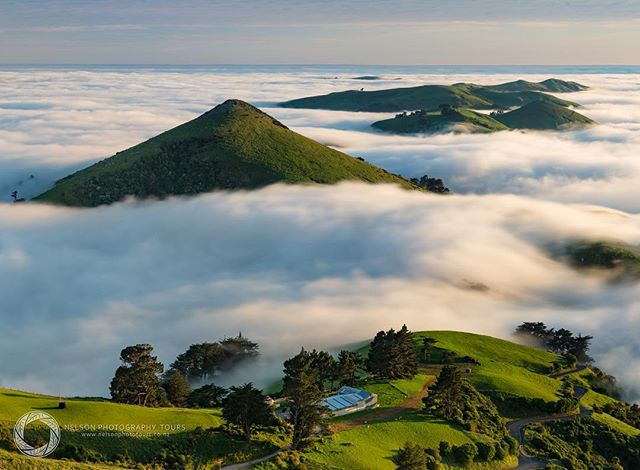 Early morning sea fog rolling over the hills of Otago Peninsula.