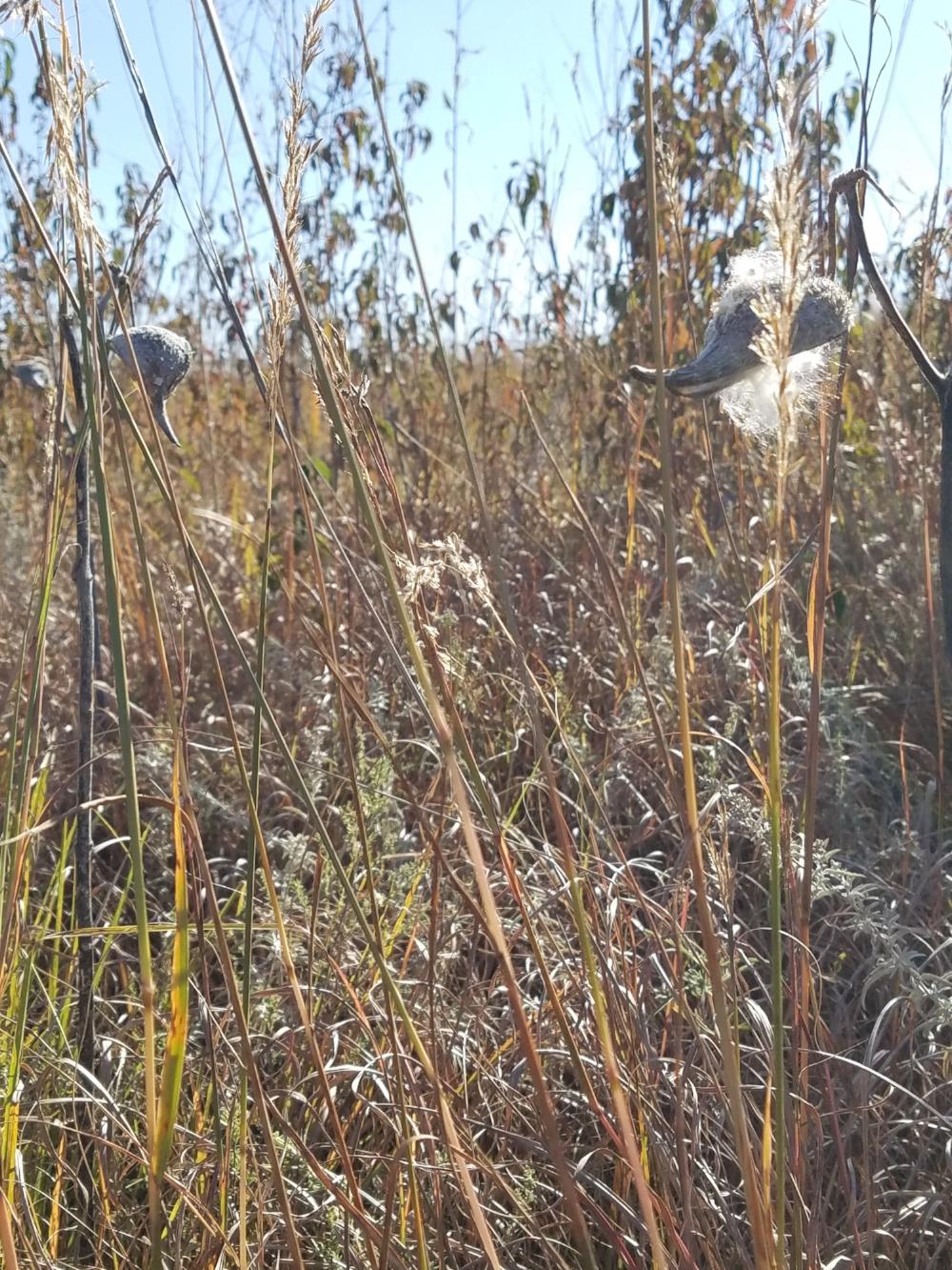 prairie_grass.jpg