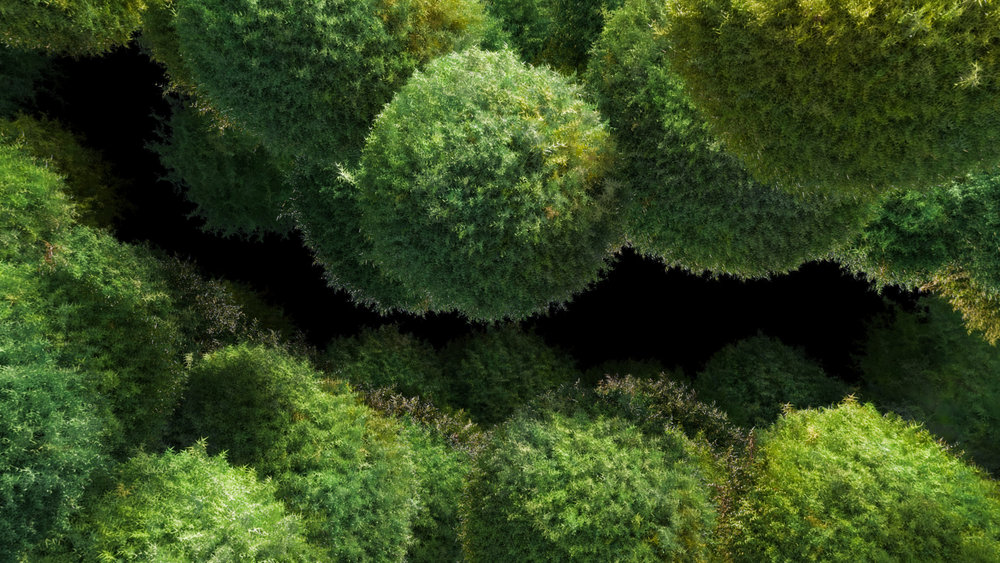 Ilohas_Mossflowers_fh_07_noDrop_blackBG_1080.jpg