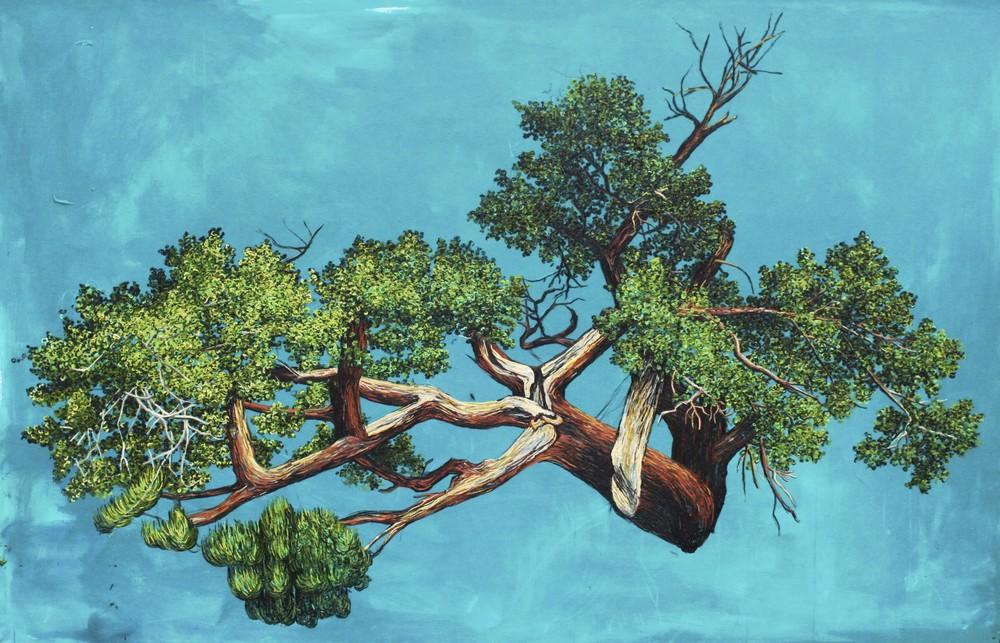 Juniper Tree.