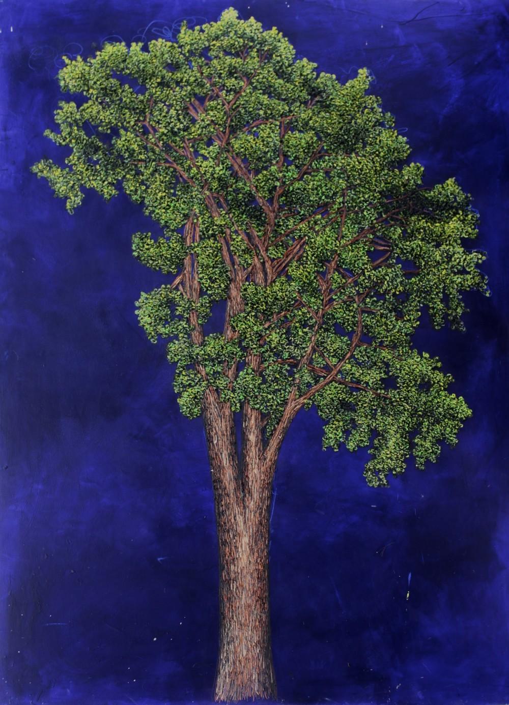 Unidentified Tree.