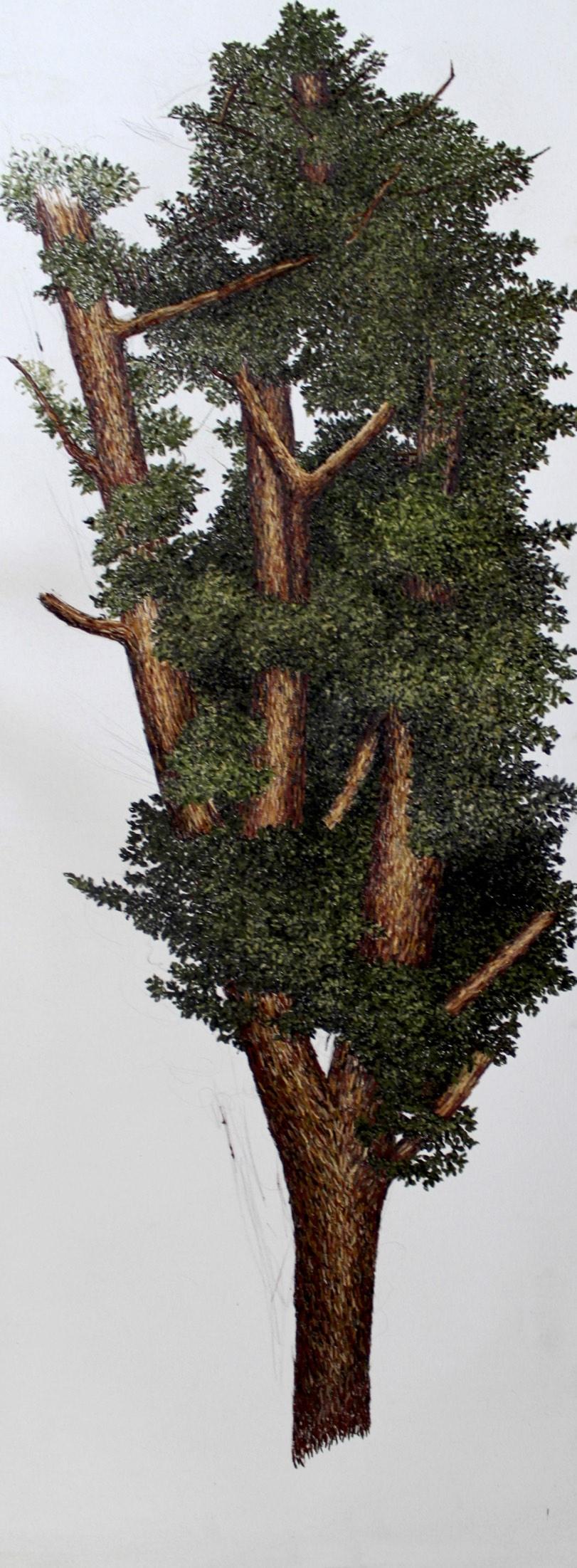 Gino Tree.