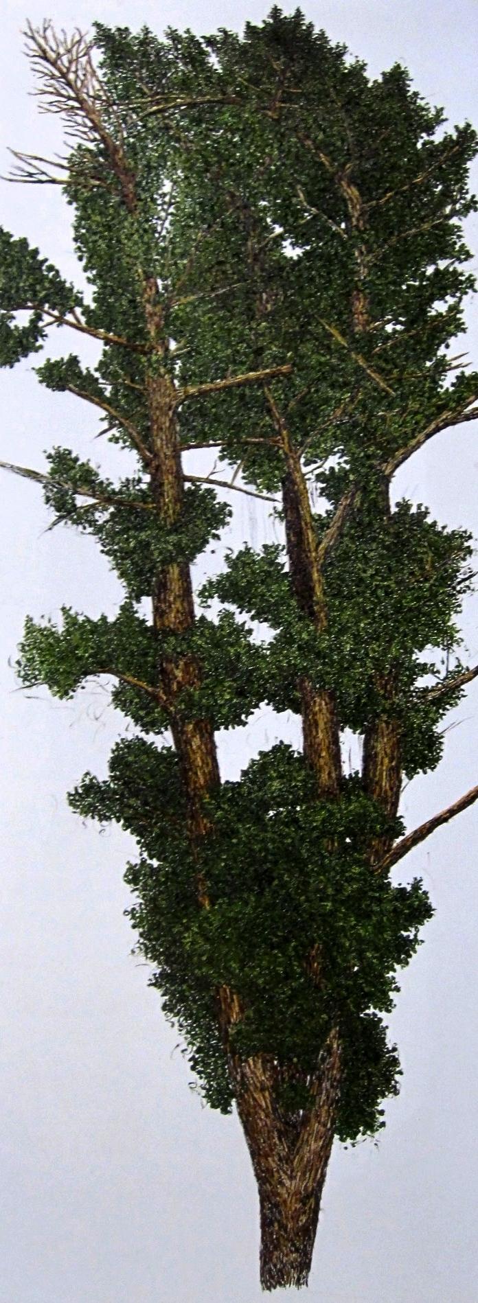Ginkgo tree fall.