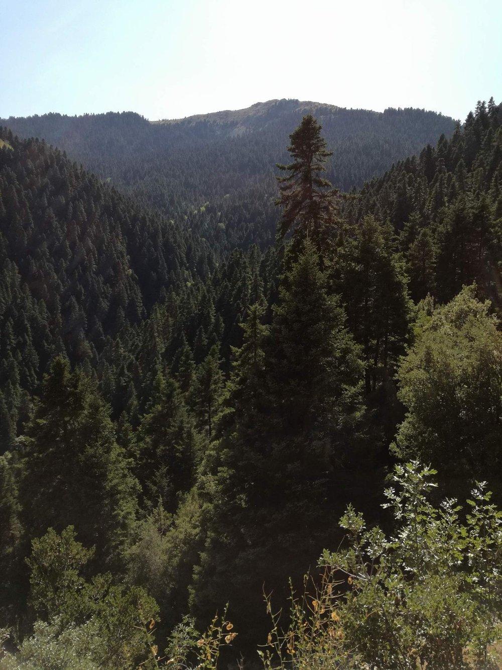 nature-trees.jpg