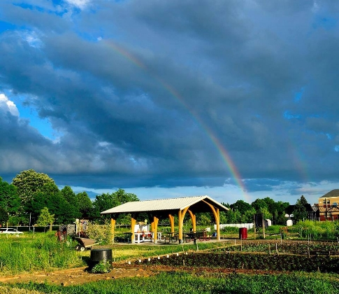 Garden Rainbow.jpg