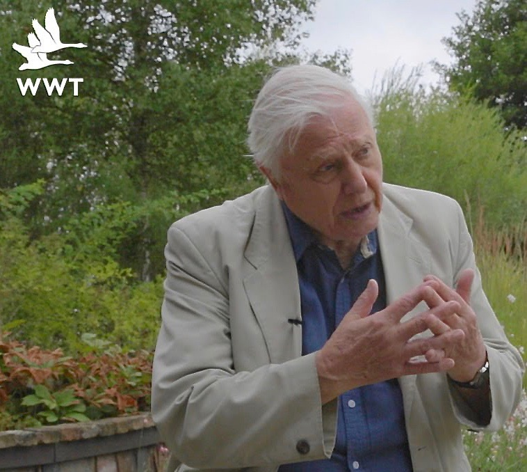 Sir David Attenborough - WWT Vice President