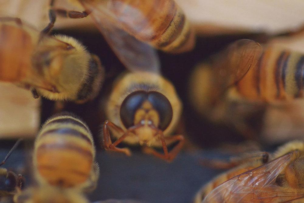 Bees_2.jpg