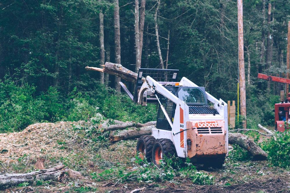 090518_TreeCutting_17.jpg