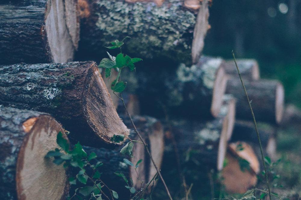 090518_TreeCutting_7.jpg
