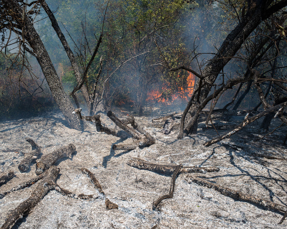 A forest fire near the frontline in east Ukraine.