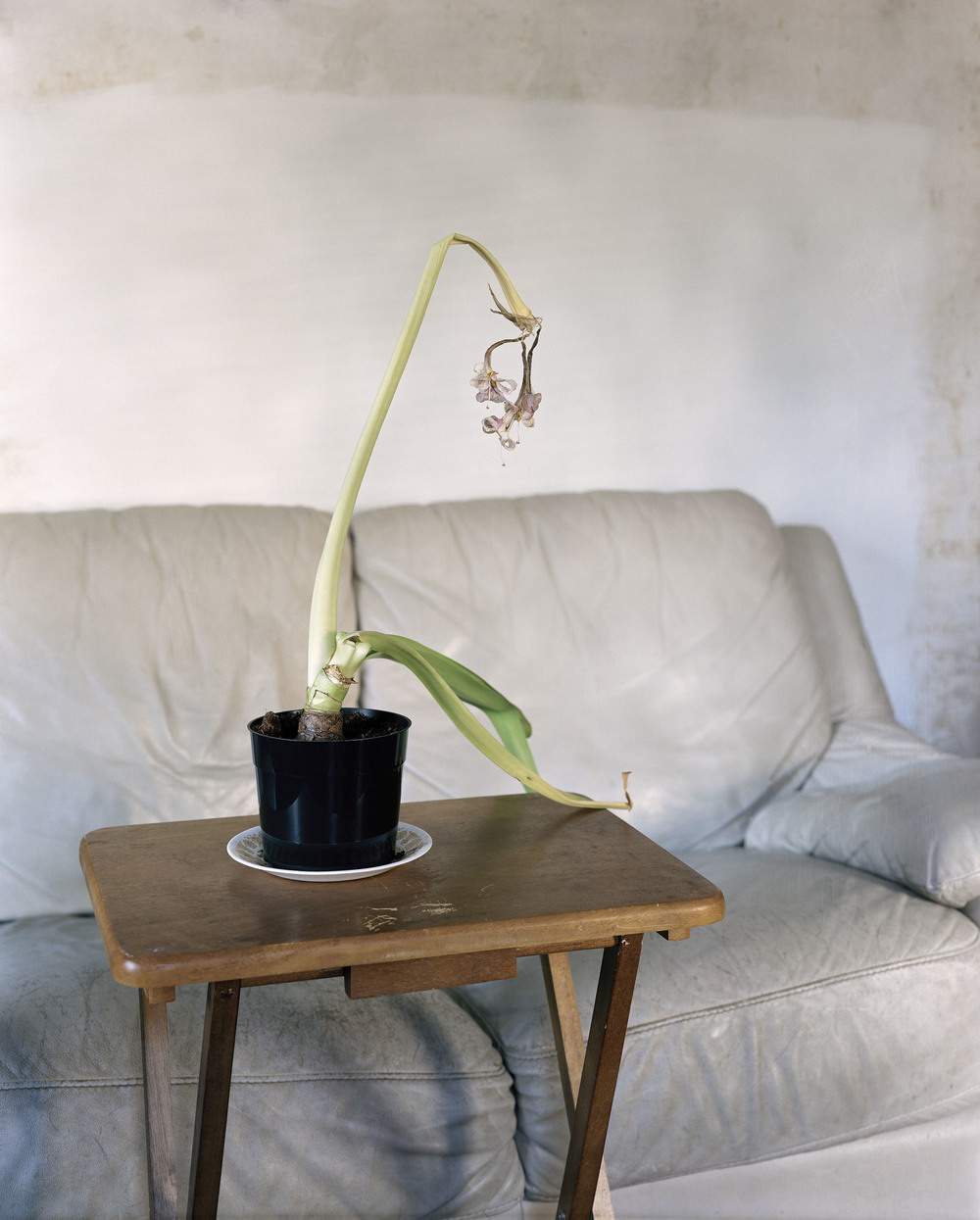 flower-couch.jpg