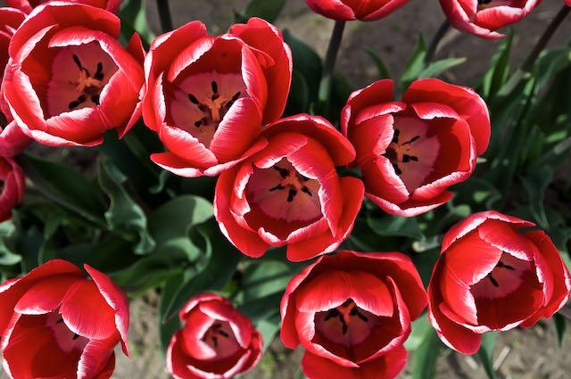 DSC_0059 - 2012-04-21 at 16-18-52.jpg