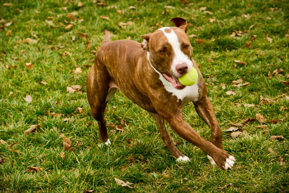 outdoor dog with ball.jpg