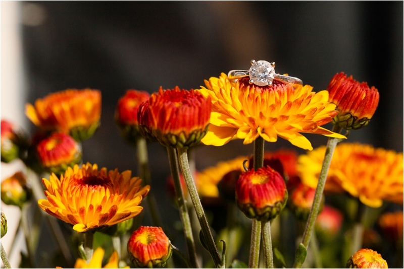 engagement ring on fall mums in Salem Massachusetts