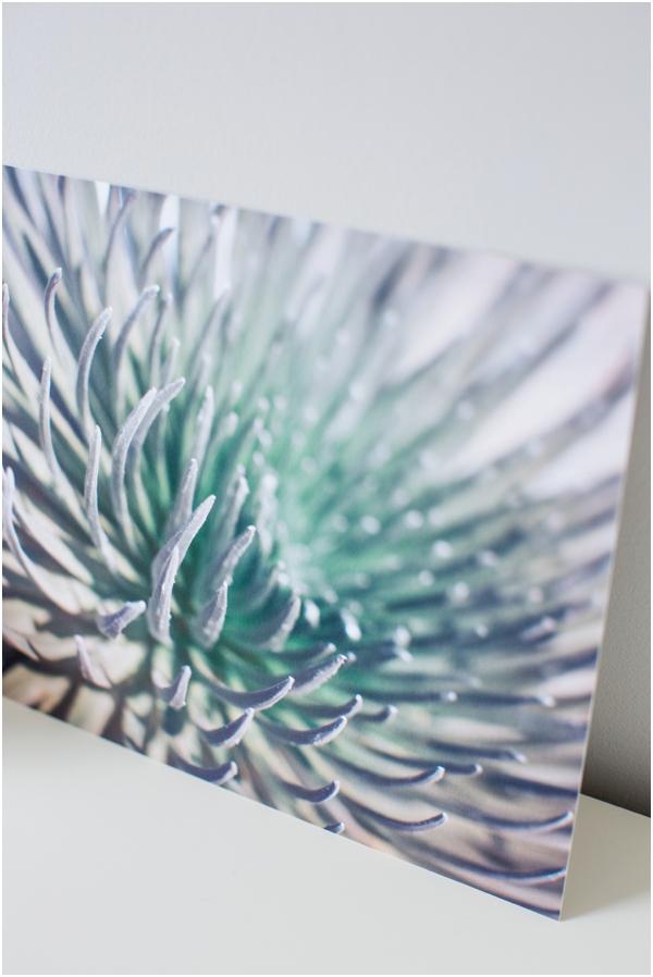 Fine Art Print of silversword in Maui by Deborah Zoe Photography.