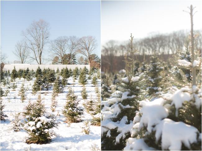 hammond christmas tree hunt deborah zoe photography _0062.JPG