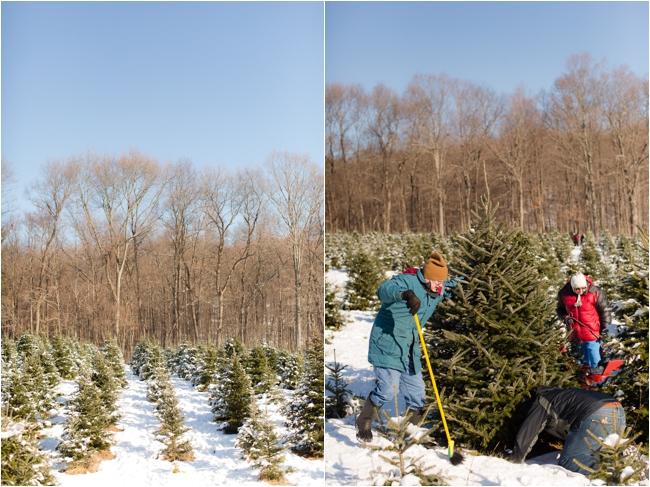 hammond christmas tree hunt deborah zoe photography _0065.JPG