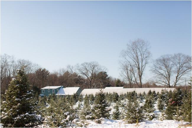 hammond christmas tree hunt deborah zoe photography _0070.JPG