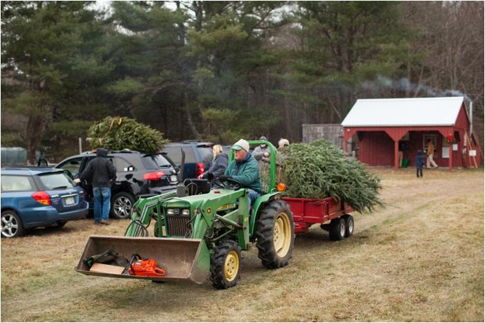 nutter christmas tree farm deborah zoe photography deborah zoe blog boston wedding photographer0016.JPG