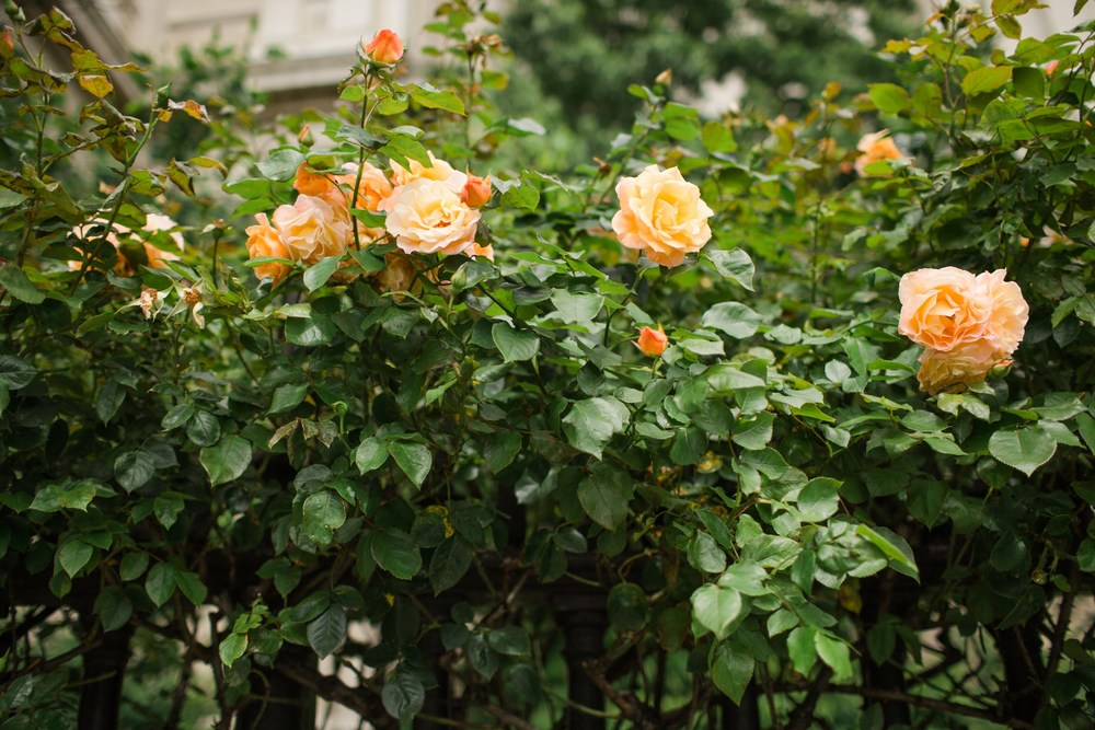 london_blog_0033.JPG