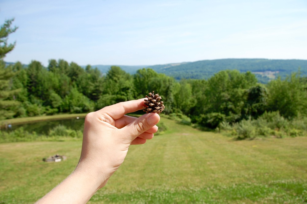 tiny pinecone