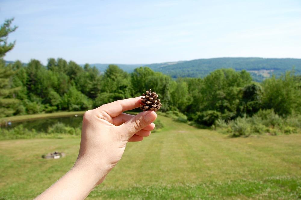tiny pinecone