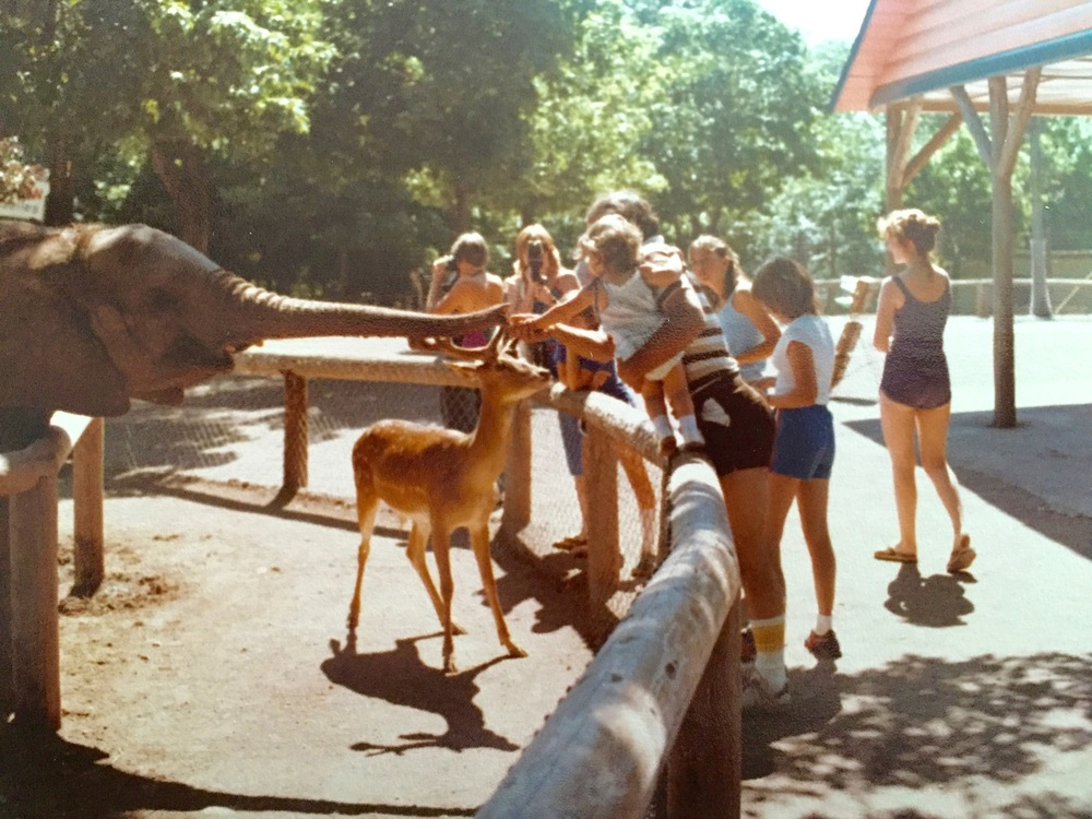Catskill Game Farm elephant and deer circa 1981