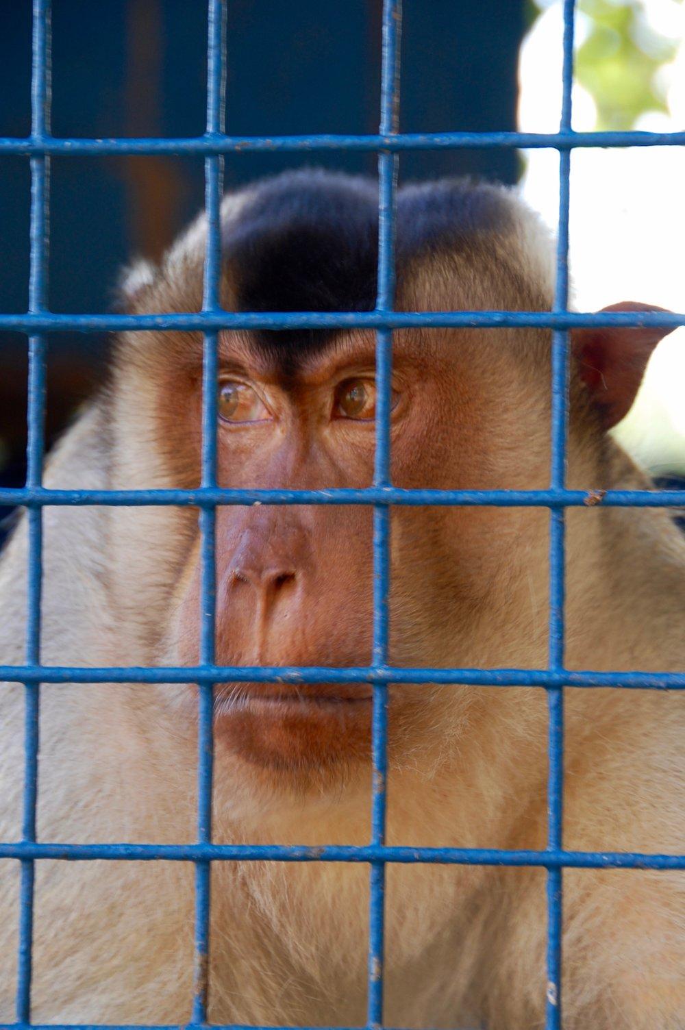 bailwick ranch baboon
