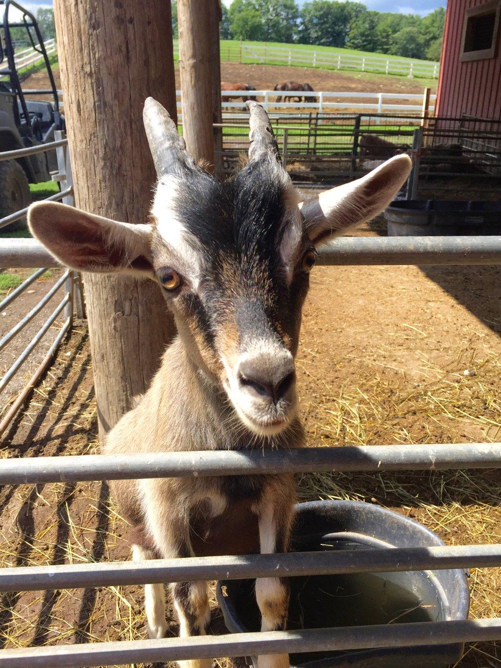 goat ravine farm