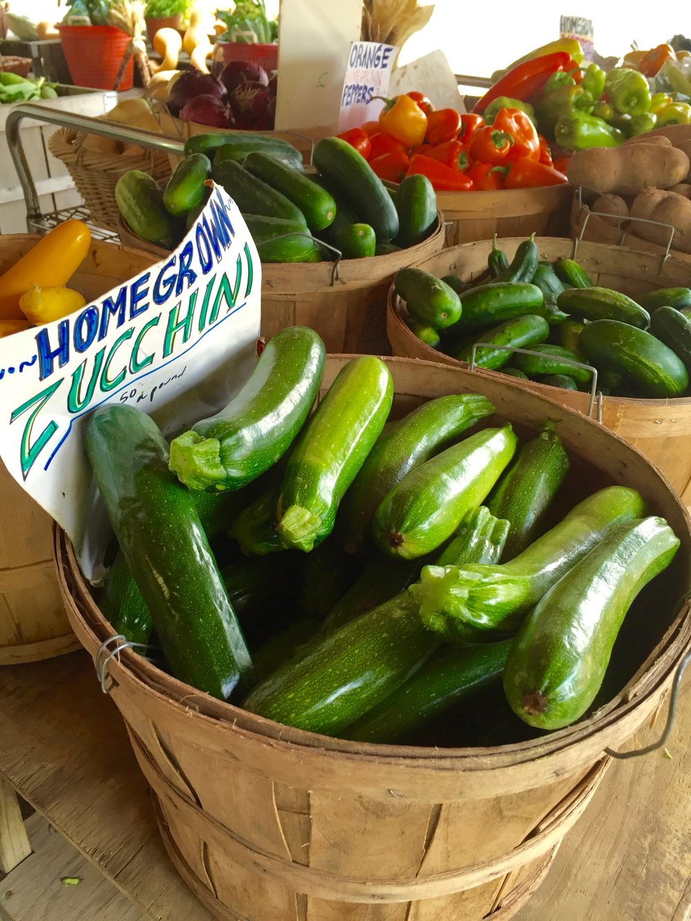 Zucchini at Story Farms in Catskill, NY